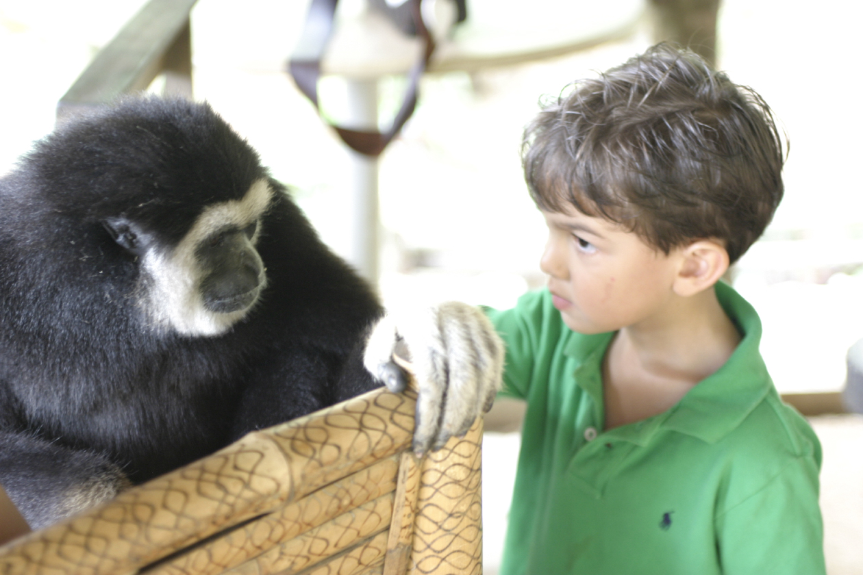 gibbon_and_ld_looking_at_each_other_phuket_thailand_2007