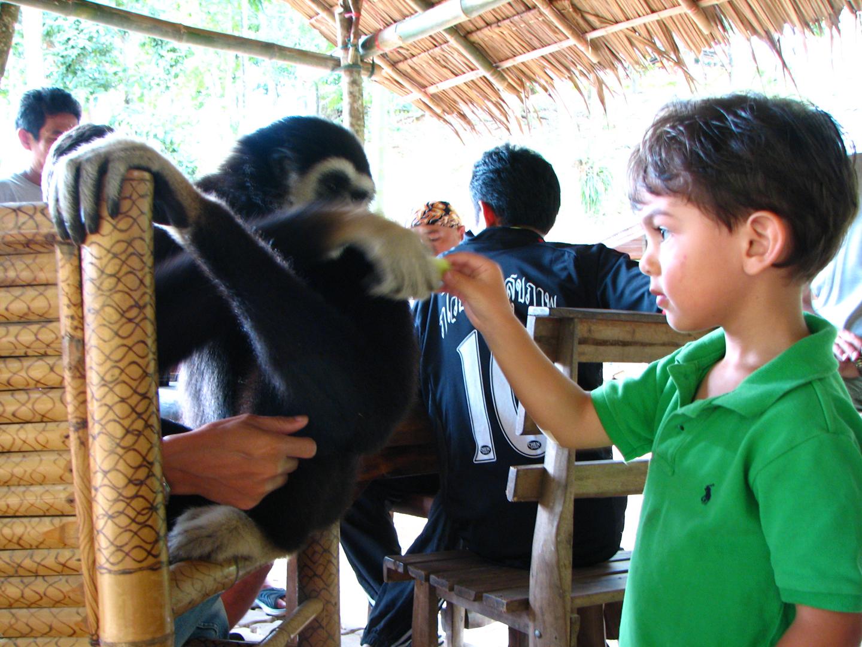 7_ld_feeding_gibbon_phuket_thailand_sept_2007