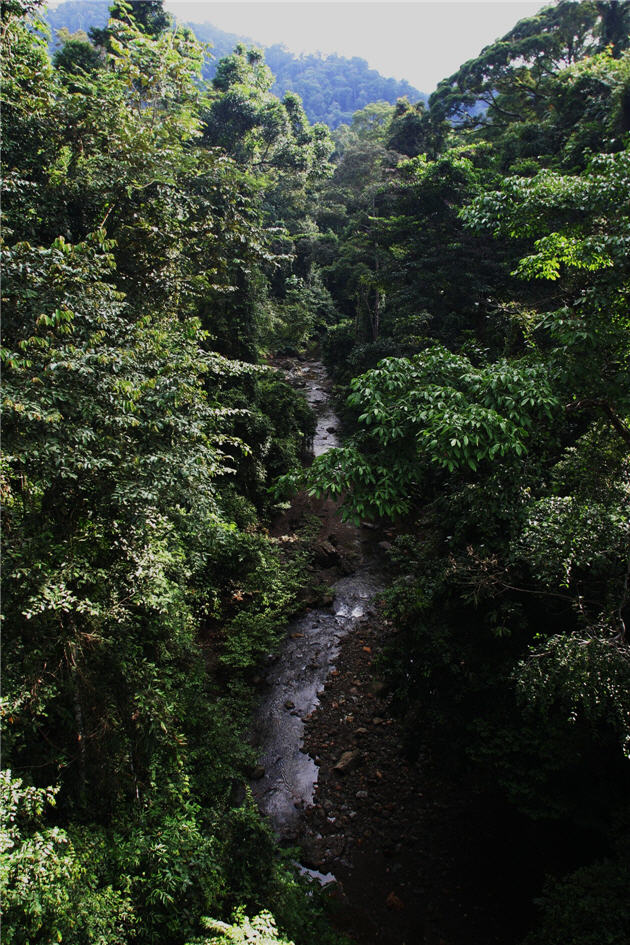 borneo-rainforest_0
